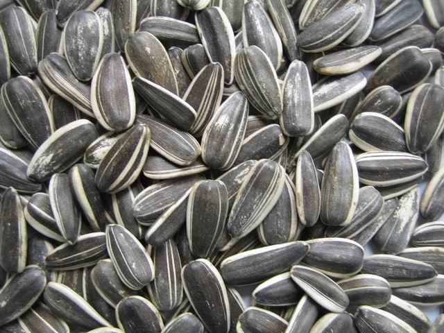 Плюсы употребления семян подсолнечника